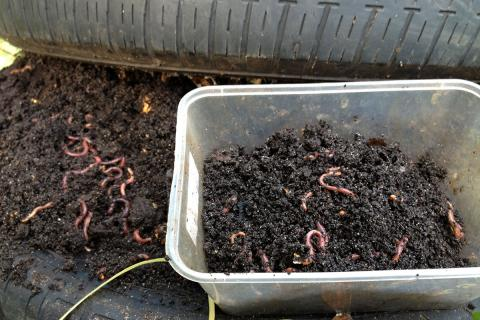 Worm Farm Science Project for Kids