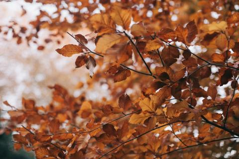 The Science of Fall Foliage: An Exploration of Why Leaves Change Colors